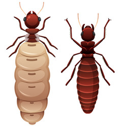 Two termites white background vector