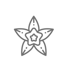 Vanilla star anise line icon vector