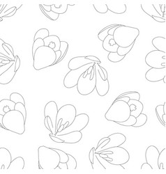 Crocus outline on white background vector