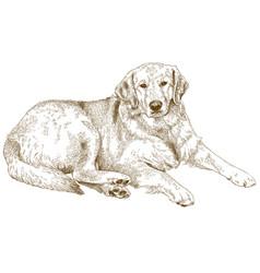 Engraving of labrador vector