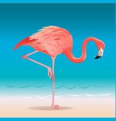 exotic pink flamingo walking on hot summer vector image