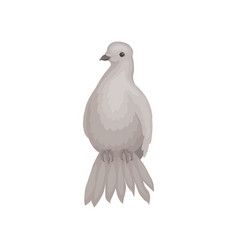 Gray dove with fluffy tail bird with small head vector