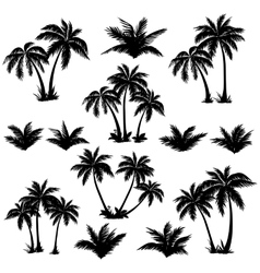 Tropical palm trees set silhouettes vector image vector image