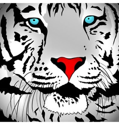 Abstract White Tiger vector image
