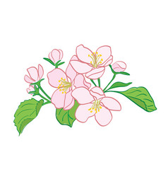 Rosy apple-tree flowers bouquet vector