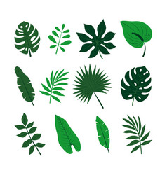 tropical leaves set jungle palm leaves collection vector image