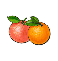 Whole shiny orange and pink grapefruit with fresh vector