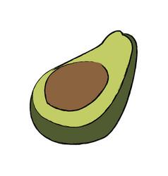 avocado tropical fruit green vitamins vector image vector image