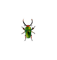 realistic beetle element of vector image vector image