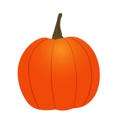 isolated pumpkin icon vector image