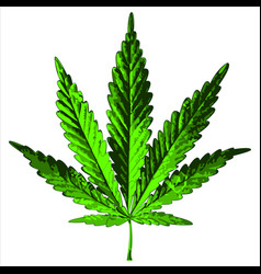 green hemp leaf vector image