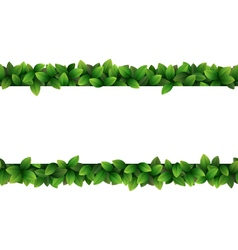Green leaves seamless frame isolated on white vector image