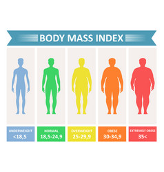 index mass body vector image