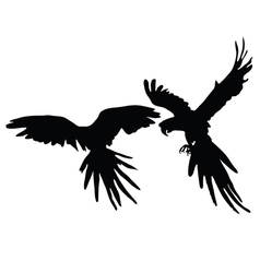 parrot two black silhouette vector image