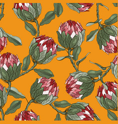 Protea flowers hand drawn seamless pattern vector