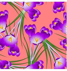 Purple crocus flower on orange red background vector