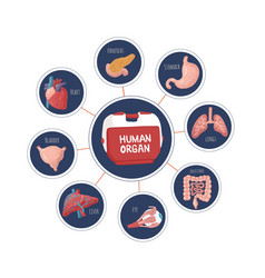 set of human internal organs for transplantation vector image