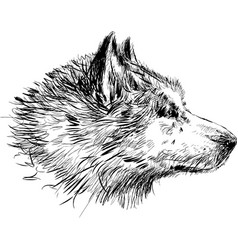Sketch portrait a guard dog vector