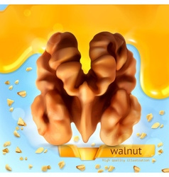 Walnut background vector