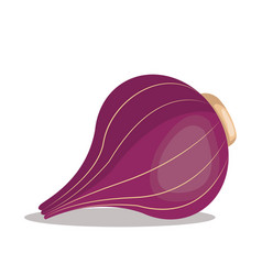 red onion nutrition healthy image vector image vector image
