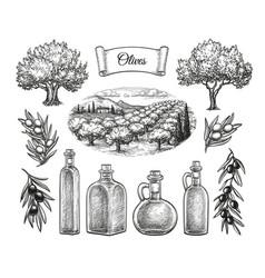 olive big set vector image