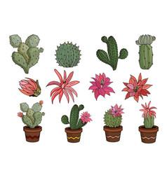 Flowers succulents cacti isolated on white vector