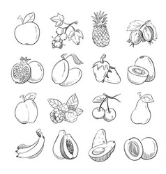 hand drawing doodle fruits vector image