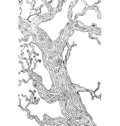 oak tree branch and trunk vector image