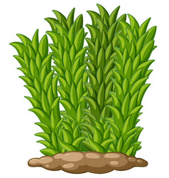 tall grass on the ground vector image vector image