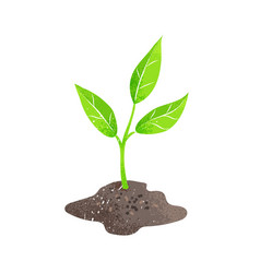 green plant sprout vector image