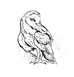 Hand drawn abstract graphic owl vector