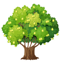 Pear tree in cartoon style isolated on white vector