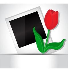 Photo and tulip vector