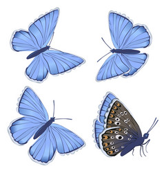 set blue butterflies lycaenidae isolated on vector image