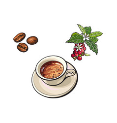 beans cup of coffee coffee tree branch vector image vector image