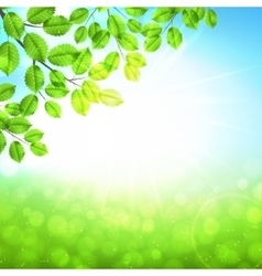 Abstract nature background with leaves and sun vector image