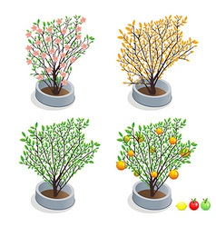 Trees in pots vector image