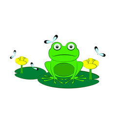 green frog among water lilies vector image