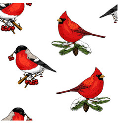 Seamless pattern holly and bullfinch red cardinal vector