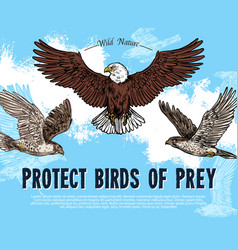 Sketch poster for birds of prey protection vector