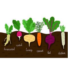 vegetables garden growing vegetable gardening vector image