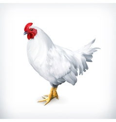 White chicken vector