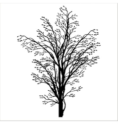 spring tree silhouette vector image vector image