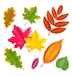 colorful autumn leaves set fall leaf collection vector image