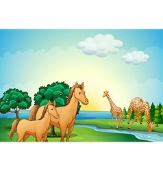 Horses and giraffe near the river vector