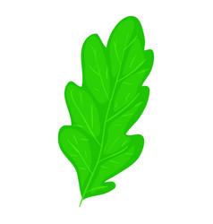 Oak leaf icon cartoon style vector