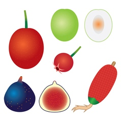 set of exotic fruits vector image