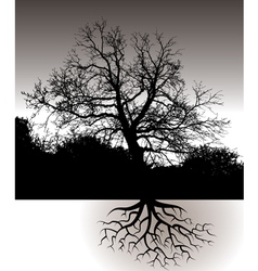 A Tree with Roots Landscape vector image