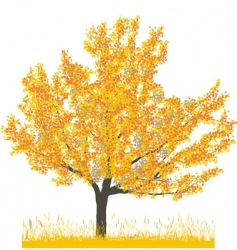 cherry tree in autumn vector image