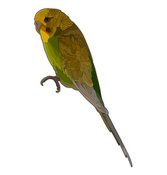 Green budgerigar vector